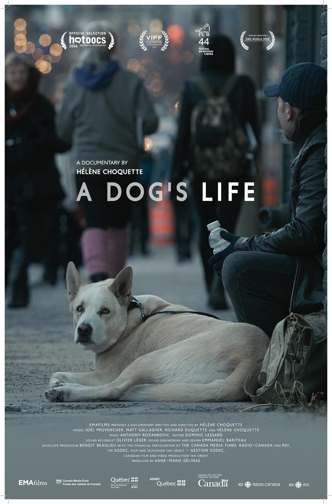 a dog s life ema films